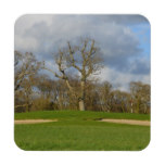 Let's Play Golf Beverage Coaster